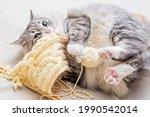Fluffy Cute Gray Cat Plays...