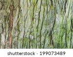 Tree Bark Close Up Background...
