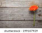 Orange Gerbera Flower On Woode...