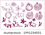 set of pomegranate fruit sketch ... | Shutterstock .eps vector #1991234051