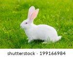 Stock photo white rabbit sitting in green grass 199166984