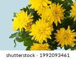 bouquet of yellow ... | Shutterstock . vector #1992093461
