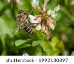 Macro Shot Of A Bee Sitting On...