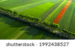 Aerial View Of Poppy Flowers On ...