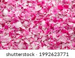 Top View Of Beautiful Pink Rose ...