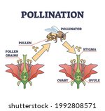 pollination as plant... | Shutterstock .eps vector #1992808571