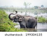 Elephant Taking A Bath In The...