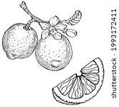 lemon isolated on white...   Shutterstock .eps vector #1993172411