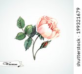watercolor rose vector.  vector ... | Shutterstock .eps vector #199321679