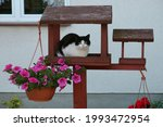 The Cat Sits In The Bird Feeder ...