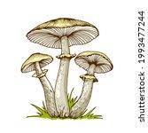 Poisonous Mushrooms Hand Drawn...