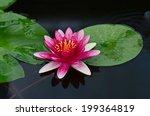 beauty water lilly flower | Shutterstock . vector #199364819