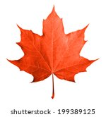 red maple leaf isolated white... | Shutterstock . vector #199389125