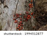A Large Group Of Insects  The...