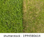Small photo of Juxtaposition of green lush lawn grass and mown grass