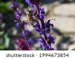 On A Blue Sage Flower Ring A...