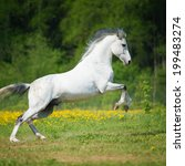 white horse playing on the... | Shutterstock . vector #199483274