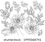set with peony flowers and... | Shutterstock .eps vector #1995068741