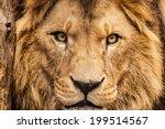 Stock photo closeup portrait of an african lion 199514567