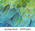 Close Up Of The Feathers Of A...
