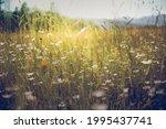 summer meadow landscape.... | Shutterstock . vector #1995437741