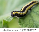 The Caterpillar Crawls On The...