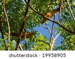 Birds in a tree - stock photo