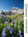 Mount Rainier National Park ...