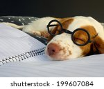 Stock photo very tired brittany puppy after a hard day at puppy school 199607084