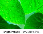 A Green Leaf With Raindrops On...