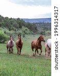 American Wild West Montana...