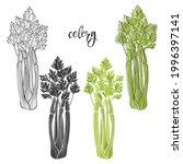 celery. vector illustration ...   Shutterstock .eps vector #1996397141