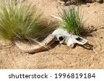 Animal Skull With Horns In The...