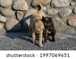 The photo was taken in the morning near the road connecting the monasteries of Meteora in Greece. The photo shows that these cute cats are very attached to each other. June 17, 2021