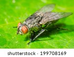 fly on a green leaves. | Shutterstock . vector #199708169