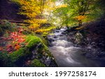 Forest Stream In The Autumn...