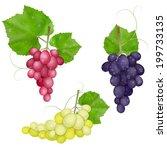 different varieties of grapes... | Shutterstock . vector #199733135