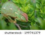 chameleon | Shutterstock . vector #199741379
