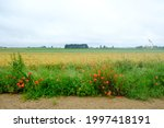 A Dirt Road Among Fields With...