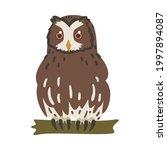 owl specie as nocturnal bird of ...   Shutterstock .eps vector #1997894087