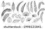 line art tropical leaves....   Shutterstock .eps vector #1998121841