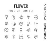 premium pack of flower line...