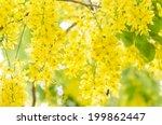golden shower or cassia fistula ... | Shutterstock . vector #199862447