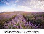 lavender | Shutterstock . vector #199903091