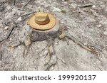 Lost Straw Hat On A Tree Stump ...