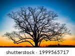 The Silhouette Of A Tree At...
