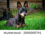 old black male miniature... | Shutterstock . vector #2000000741