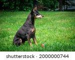 mature black male miniature... | Shutterstock . vector #2000000744