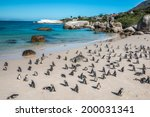 Penguin Colony   Boulders Beac...