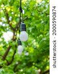 Light Bulb On Green Background  ...